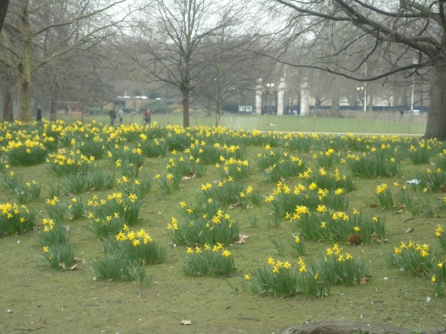 Påske liljerne i Sankt James park
