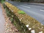 Fine stenmure med mos og sten blomster på